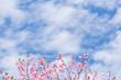 Obrazy na płótnie, fototapety, zdjęcia, fotoobrazy drukowane : 桜と青空