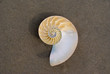 A Nautilus shell on the beach. The nautilus shell presents one of the finest natural examples of a logarithmic spiral.