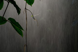 džungle déšť 4