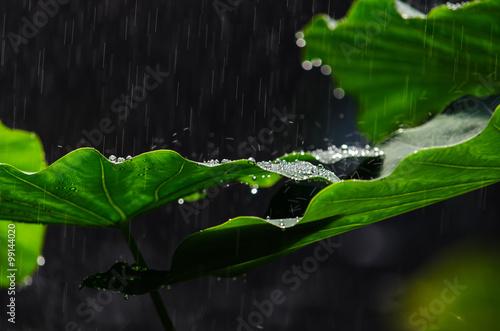 Jungle rain 2