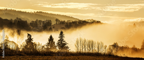 morning fog and a forest - 99182495