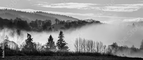 morning fog and a forest - 99185044