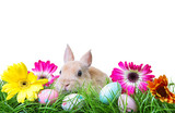 Fototapety easter eggs with rabbit and gras