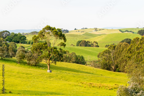 Foto op Canvas Europa Countryside of Southern Victoria, Australia