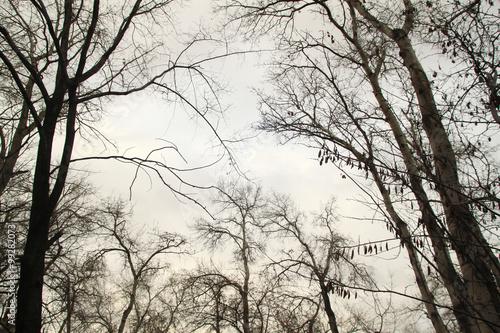 Poster gökyüzüne uzanan ağaçlar ve dallar karanlık bir günde gerçek üstü bir sanatsal t