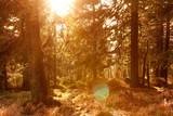 leuchtendes Gegenlicht im Harz