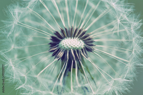 Naklejka close up of Dandelion with abstract color
