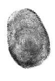Real fingerprint isolated on white paper background. Fingerprint in black and white.