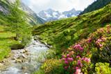Fototapety Alpenrosen am Hochgebirgsbach