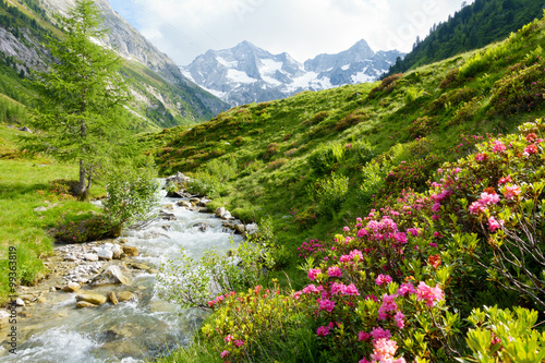 Plagát, Obraz Alpenrosen am Hochgebirgsbach