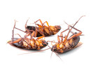 Cockroaches dead on white background - 99389079