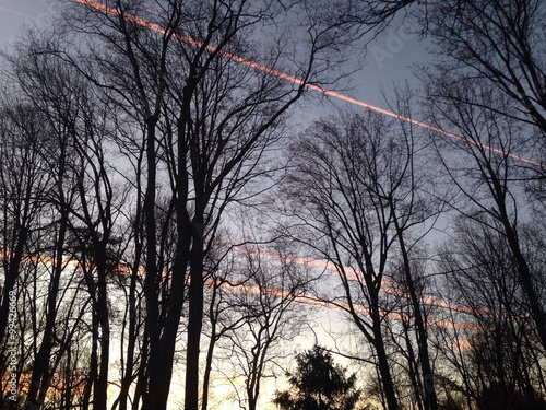early morning contrails viewed through forest