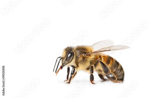 In de dag Bee abeille isolé sur fond blanc