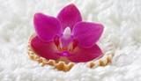 Fototapety Pinke Orchidee auf weißem Plüsch mit Muschel