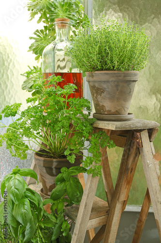 Plantes aromatiques stock photo and royalty free images on pic 99637041 - Plantes aromatiques cuisine ...