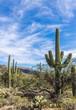 Sabino Canyon Desert in Tucson, Arizona