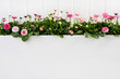 Obrazy na płótnie, fototapety, zdjęcia, fotoobrazy drukowane : Rosarote Gänseblümchen zum Frühlingsanfang auf Holz Hintergrund weiß