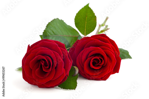 Staande foto Roses Two red roses.