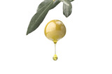 A drop of olive oil falling from one green olive on a white - 99656280