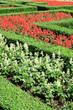 Obrazy na płótnie, fototapety, zdjęcia, fotoobrazy drukowane : Garden path with topiary landscape,English Formal Garden