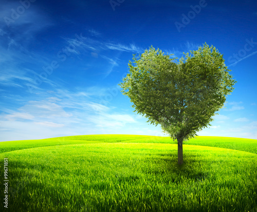 Zdjęcia na płótnie, fototapety, obrazy : Tree