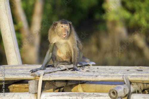 Poster Monkey.