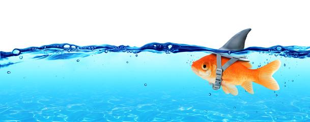 Małe ryby z ambicjami duży rekin - koncepcja biznesowa