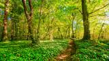 Fototapety Waldweg im Sonnenschein