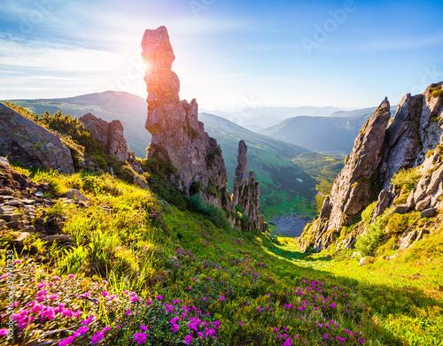 Keuken foto achterwand Nieuw Zeeland Colorful summer morning in the Carpathian mountains