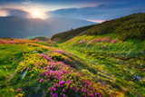 Fototapety Natural summer scene in Carpathian mountains.