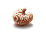 Isolated nautilus shell on white background with shadow