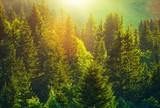 Summer in Alpine Forest