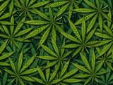 Marijuana leaves Background