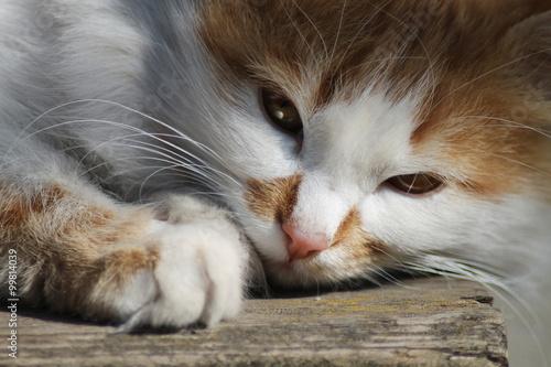 twarz kota