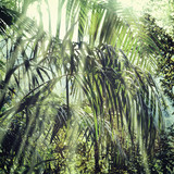 Summer forest jungle - 99814409