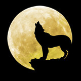 Silhouette of a wolf in front of the moon