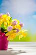 Obrazy na płótnie, fototapety, zdjęcia, fotoobrazy drukowane : Tulpen (Tulipa), und Narzissen (Narcissus), Osterglocken, gelb,