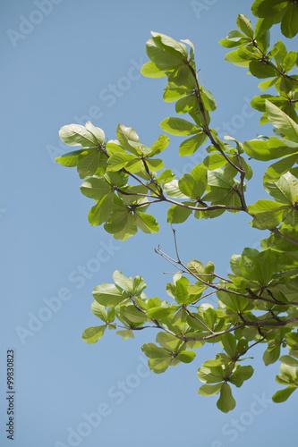 In de dag Bamboo green leaf