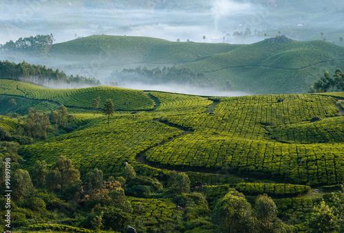 Fototapeta Morning foggy tea plantation in Munnar, Kerala, India.