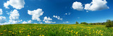 Fototapety Field with dandelions and blue sky