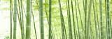 Fototapety 竹林のパノラマ