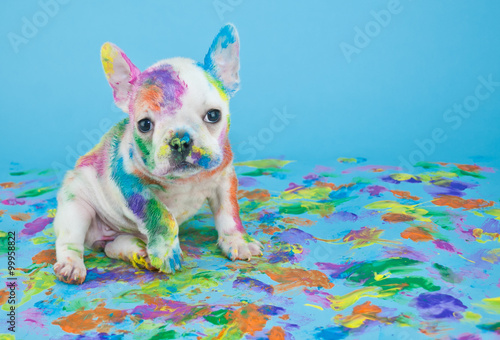 Poster Franse bulldog Painted Puppy