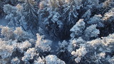 snow winter season. trees forest woods. beautiful nature. fly over