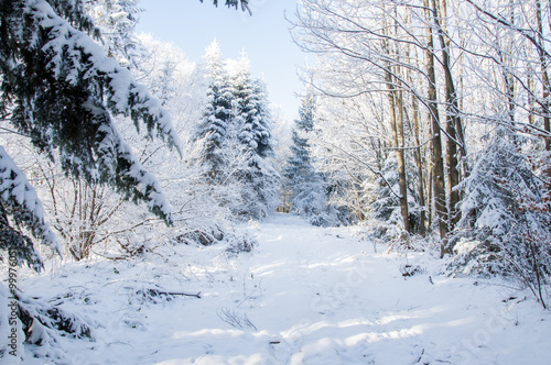 Foto op Aluminium Bergen Winter road in covered snow forest