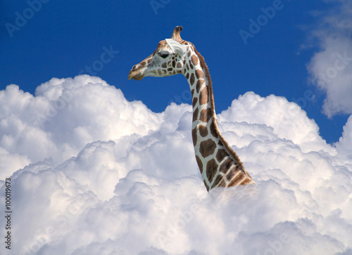 Poster giraffe above clouds