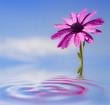 Obrazy na płótnie, fototapety, zdjęcia, fotoobrazy drukowane : flor y cielo reflejados en el agua
