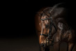 Portrait of a sport dressage horse