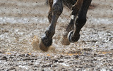 Horse's legs in the water