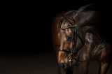 Portrait of a sport dressage horse - 100075681