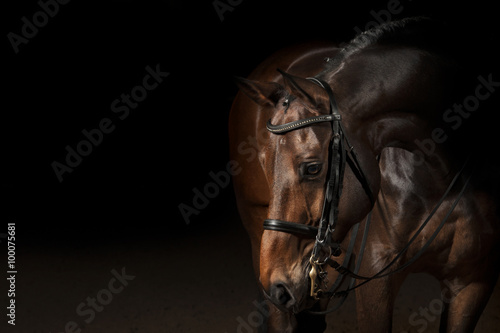 Plakat Portrait of a sport dressage horse